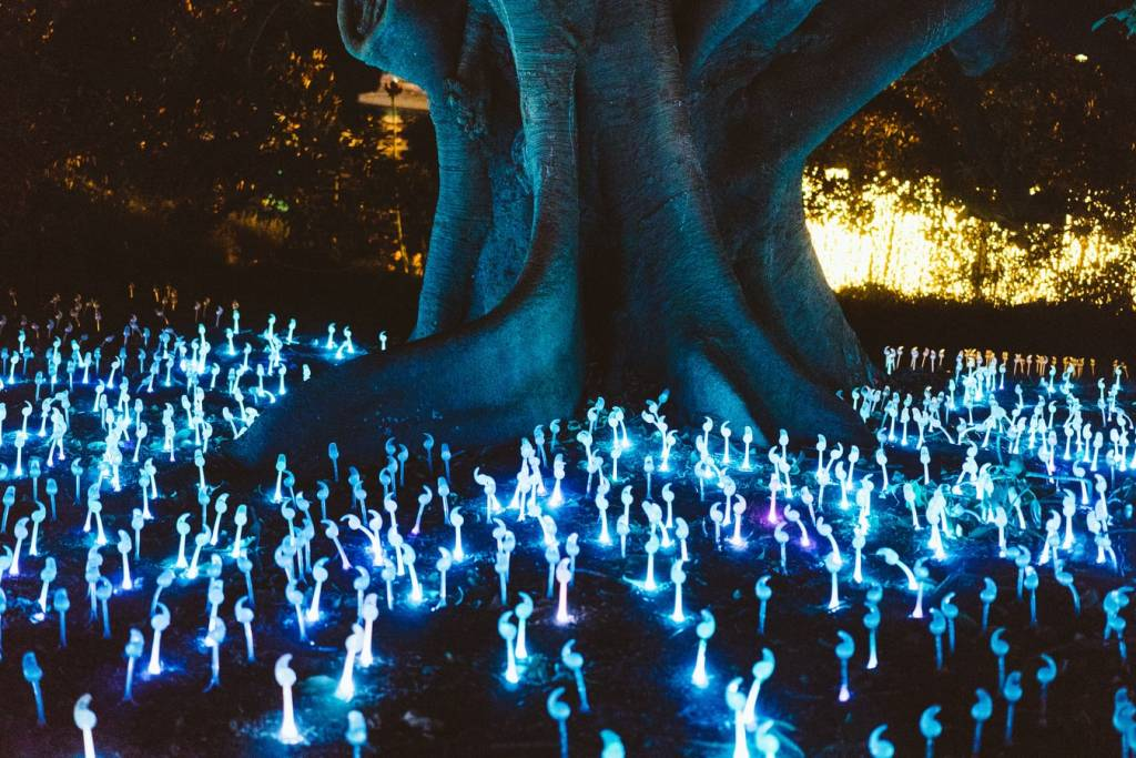 illuminated pieces of art circle around a natural tree